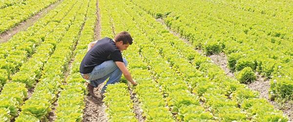 Disoccupazione agricola 2015 quando viene pagata