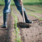 Dipendenti aziende agricole
