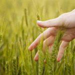 Imprenditoria agricola rosa