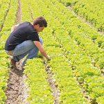 Imprenditoria giovanile agricola